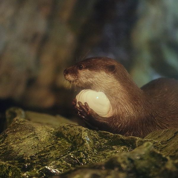 I Love My Shell Otters Cute Cute Animals Otters