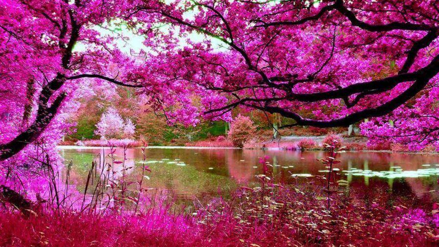 Pink Nature, Beautiful
