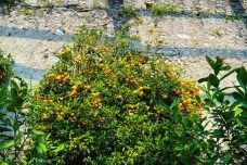 OrangeTree in Limone sul Garda (Italy)