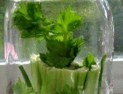 Foods You Can Re Grow Yourself From Kitchen Scraps 400 x 300