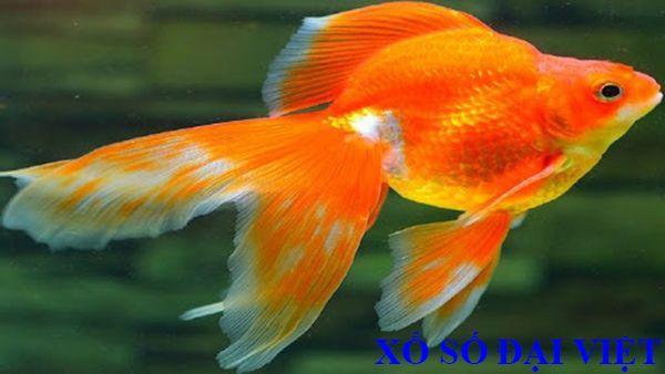 nằm mơ thấy cá vàng