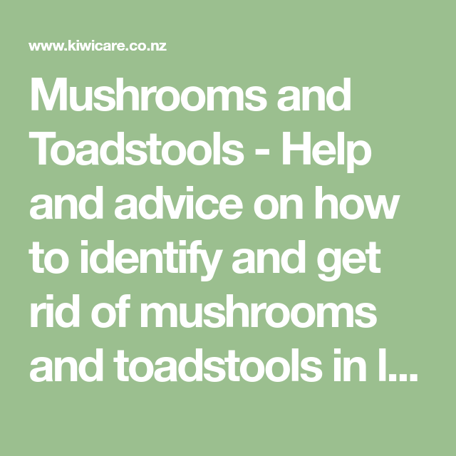 c095dbf8df2039b13521d707ea63f89b - How To Get Rid Of Toadstools In Your Lawn