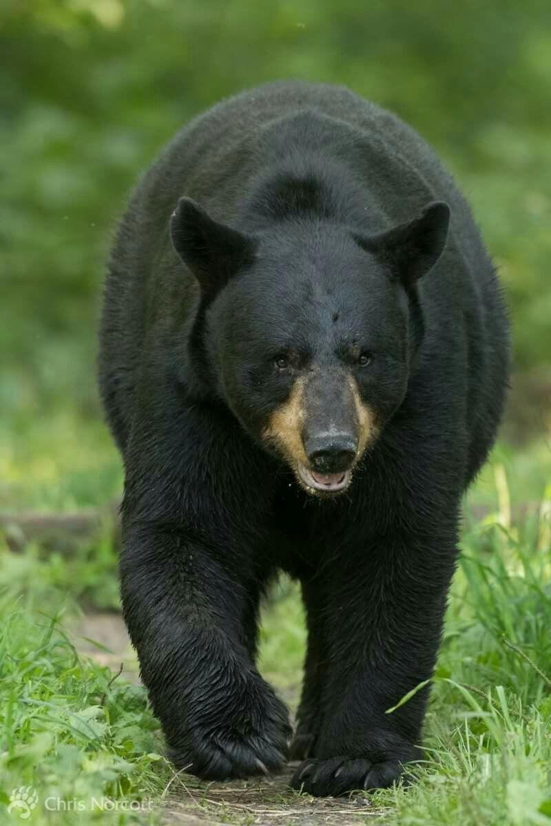 Black chubby bears, barbara berlusconi porno