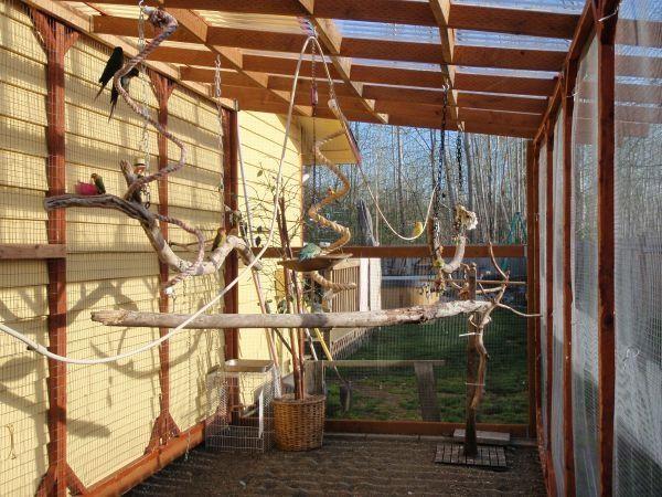 parrots aviary Pesquisa Google Parrot Cage DIY Pinterest