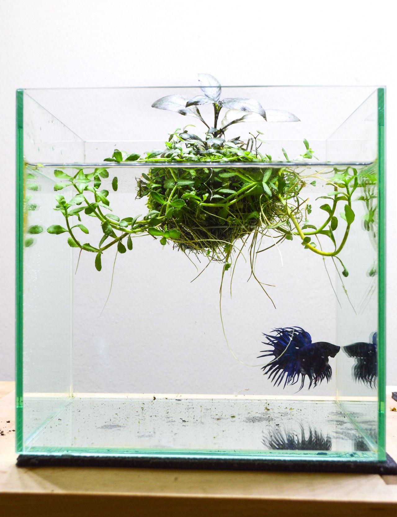 21 Best Aquascaping Design Ideas to Decor Your Aquarium - Tips ...