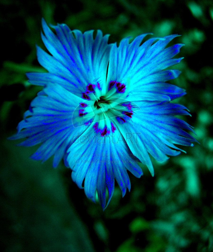 All Blue Flowers Flower By Kawaiikitteh Photography Animals Plants Nature