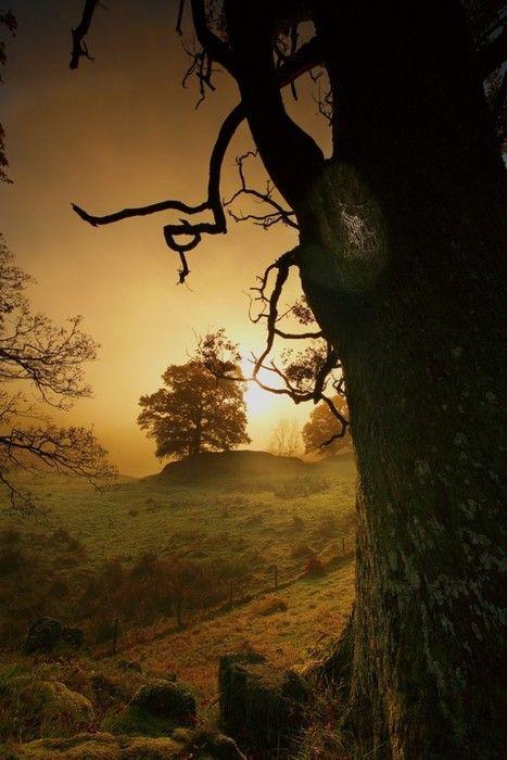 Pastoral scene at dawn