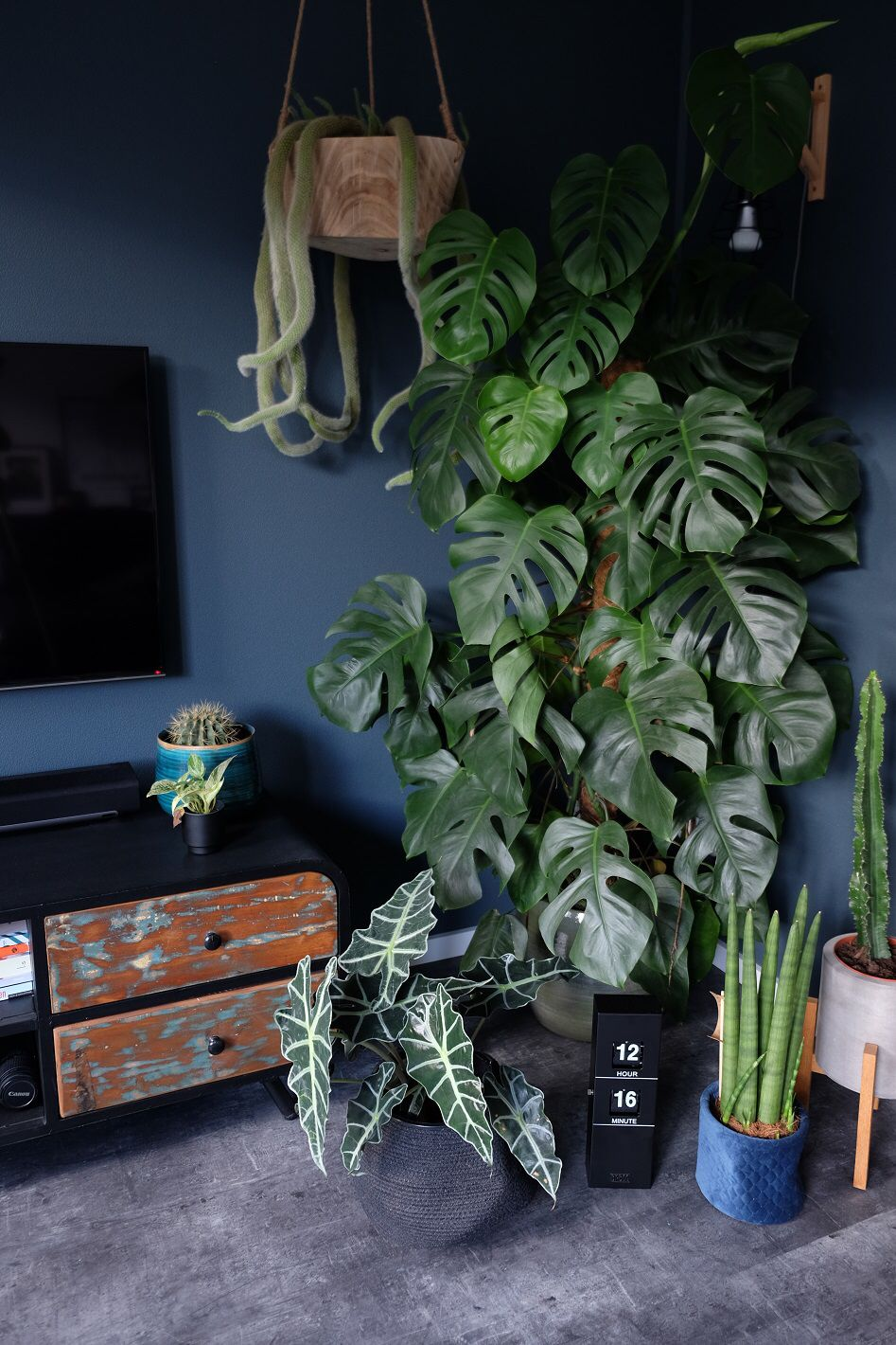 #monstera #planten #urbanjungle #urbanjunglebloggers #monsteradeliciosa #groen #interieur