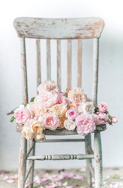 Rose Photography - Summer Rose Harvest
