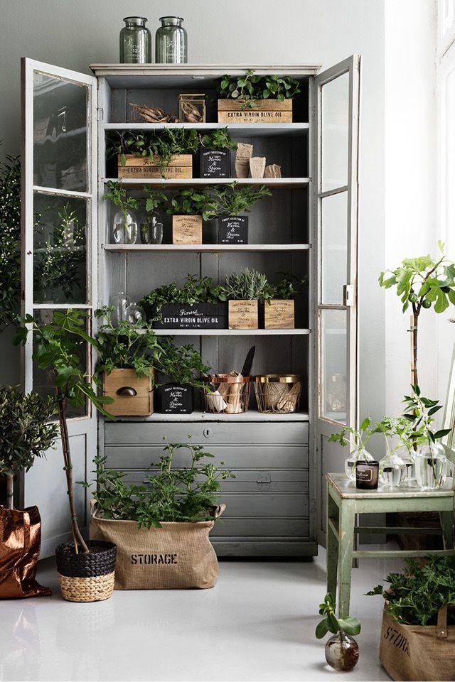 Plants In A Cabinet Interiors Indoor Garden Plants Home