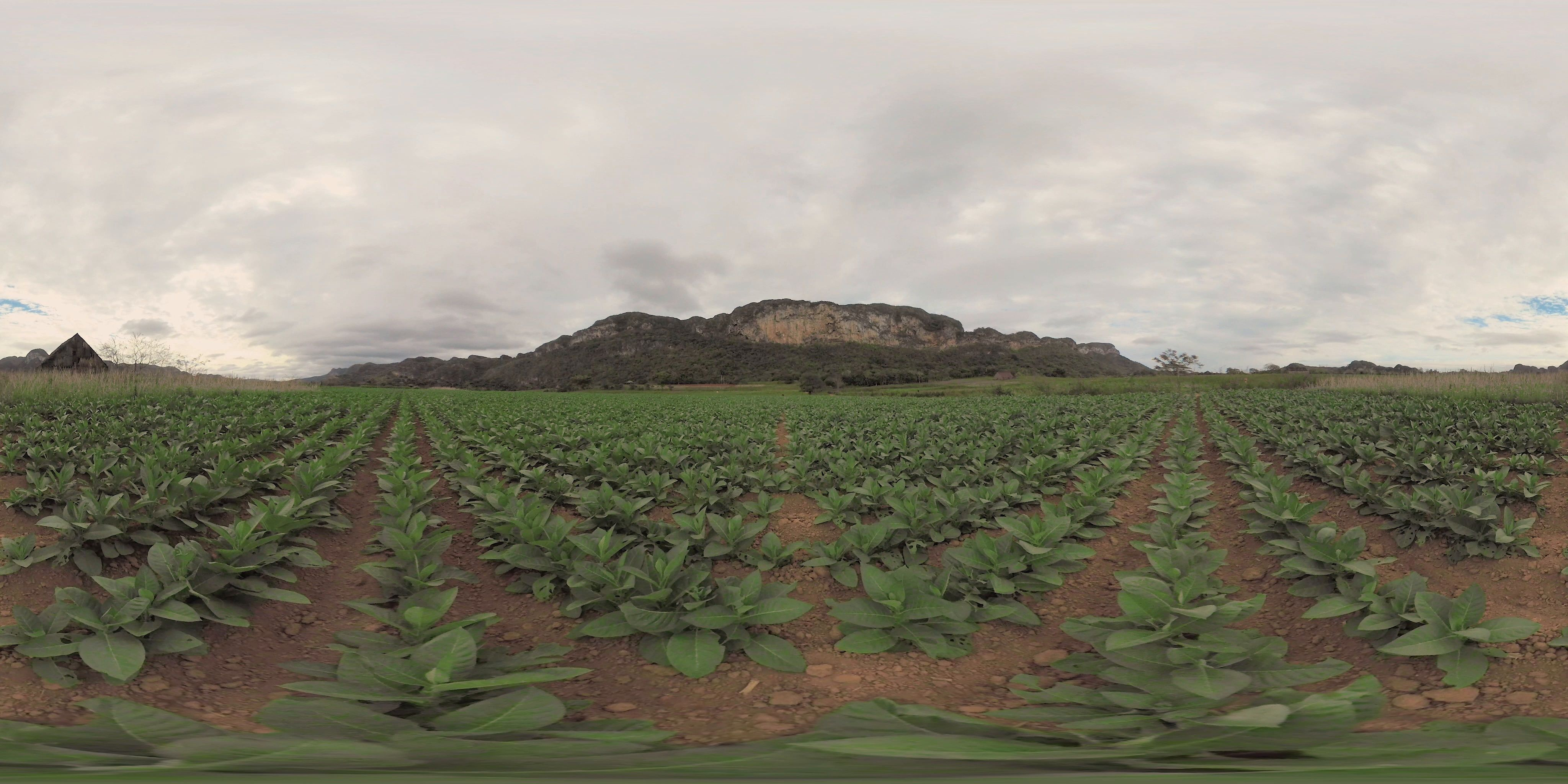 360 VR Video of a tobacco field in Vinales Stock Footage #AD ...