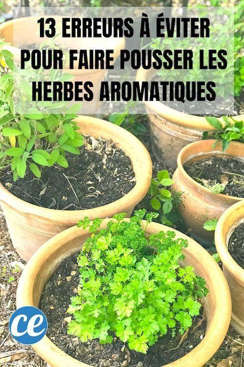 Photo of 13 Erreurs à Éviter Pour Faire Pousser Des Herbes Aromatiques à la Maison.