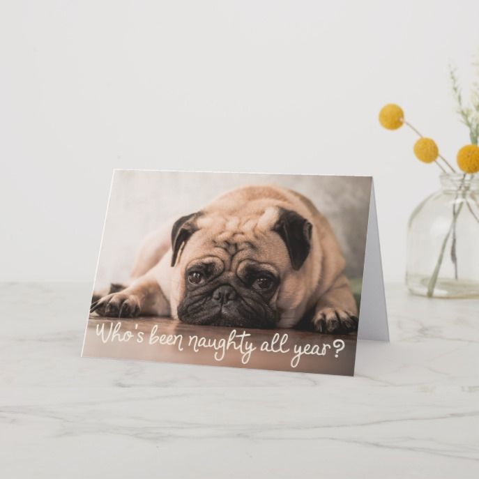 Funny Pet Dog Holiday Photo Greeting Christmas Cards Dogs