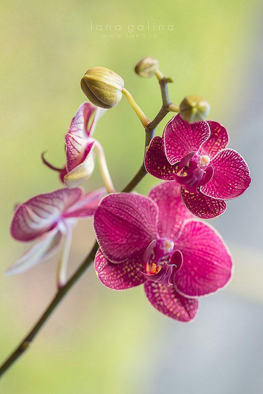 Orchids Orchids Photography Orchid Photography Orchid Flower Fantastic orchid flower wallpaper