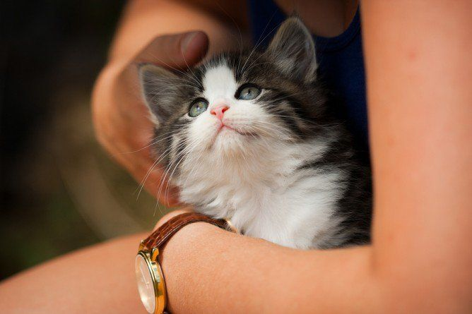 How To Bond With Your New Kitten Kittens Cat With Blue Eyes Cats