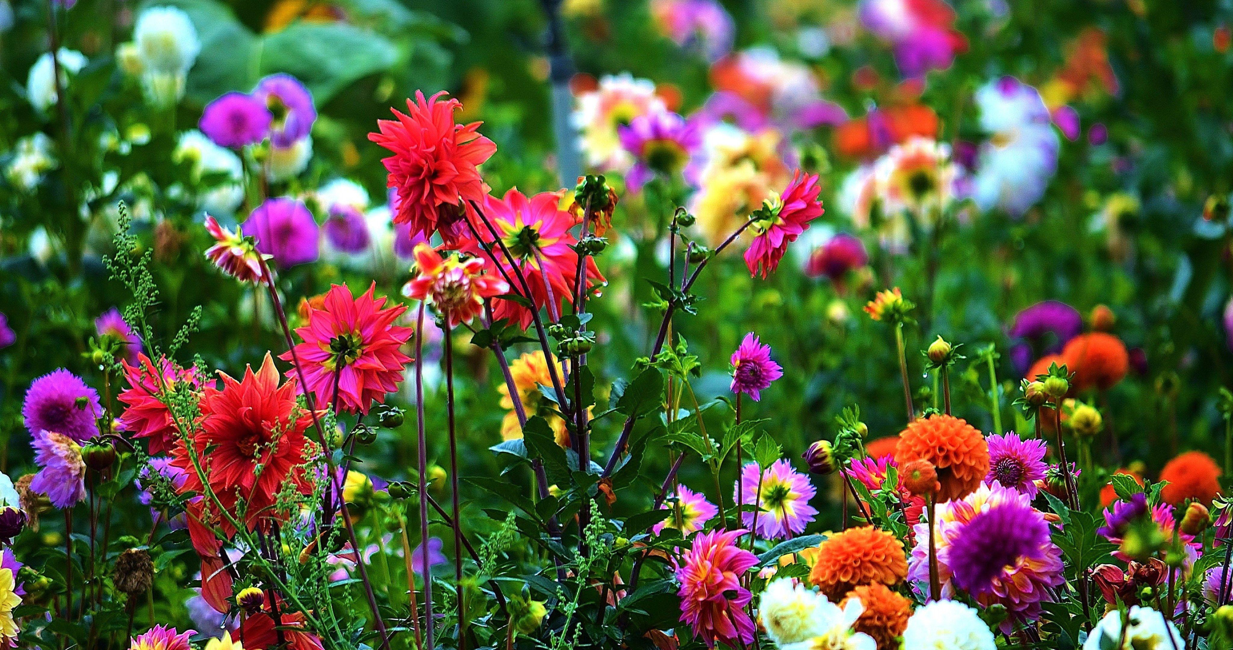 Meadow Garden Flowers 4k Ultra Hd Wallpaper