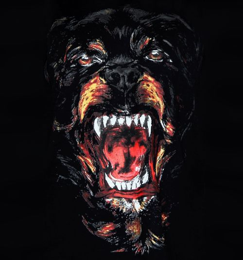 Givenchy Rottweiler With Images Givenchy Dog Givenchy