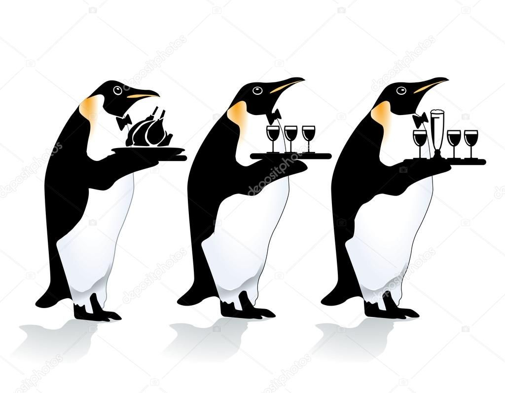 Best Penguin Images On Pinterest Penguins Penguin And Wine - Penguin in japan happily walks to local fish market everyday for lunch