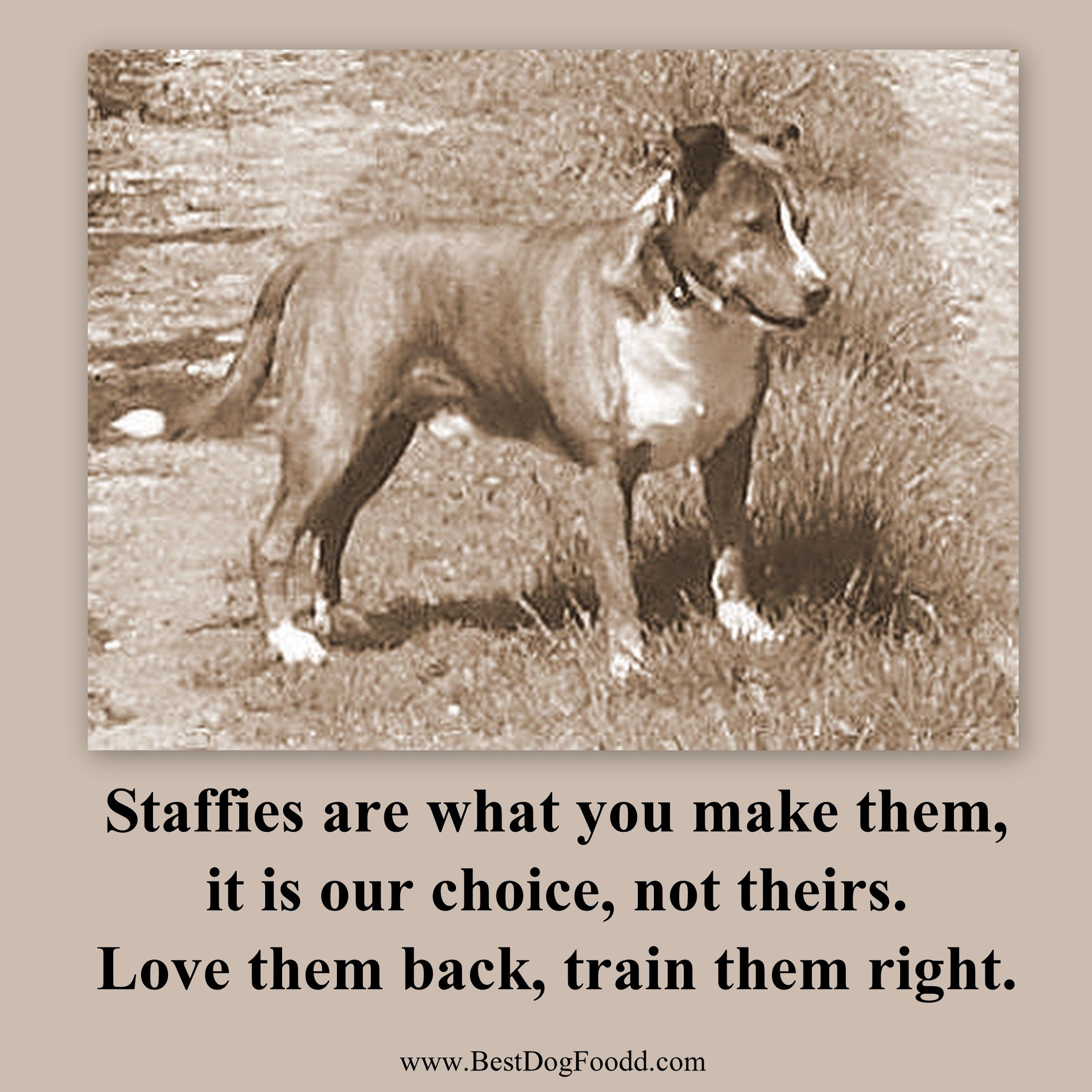 Staffies Are What You Make Them Staffies Staffy Quote