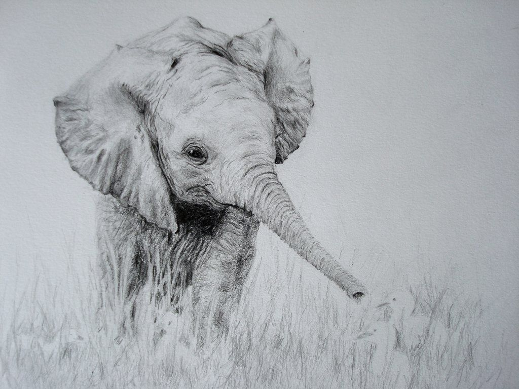 The 25+ best Baby elephant drawing ideas on Pinterest | Cute ...