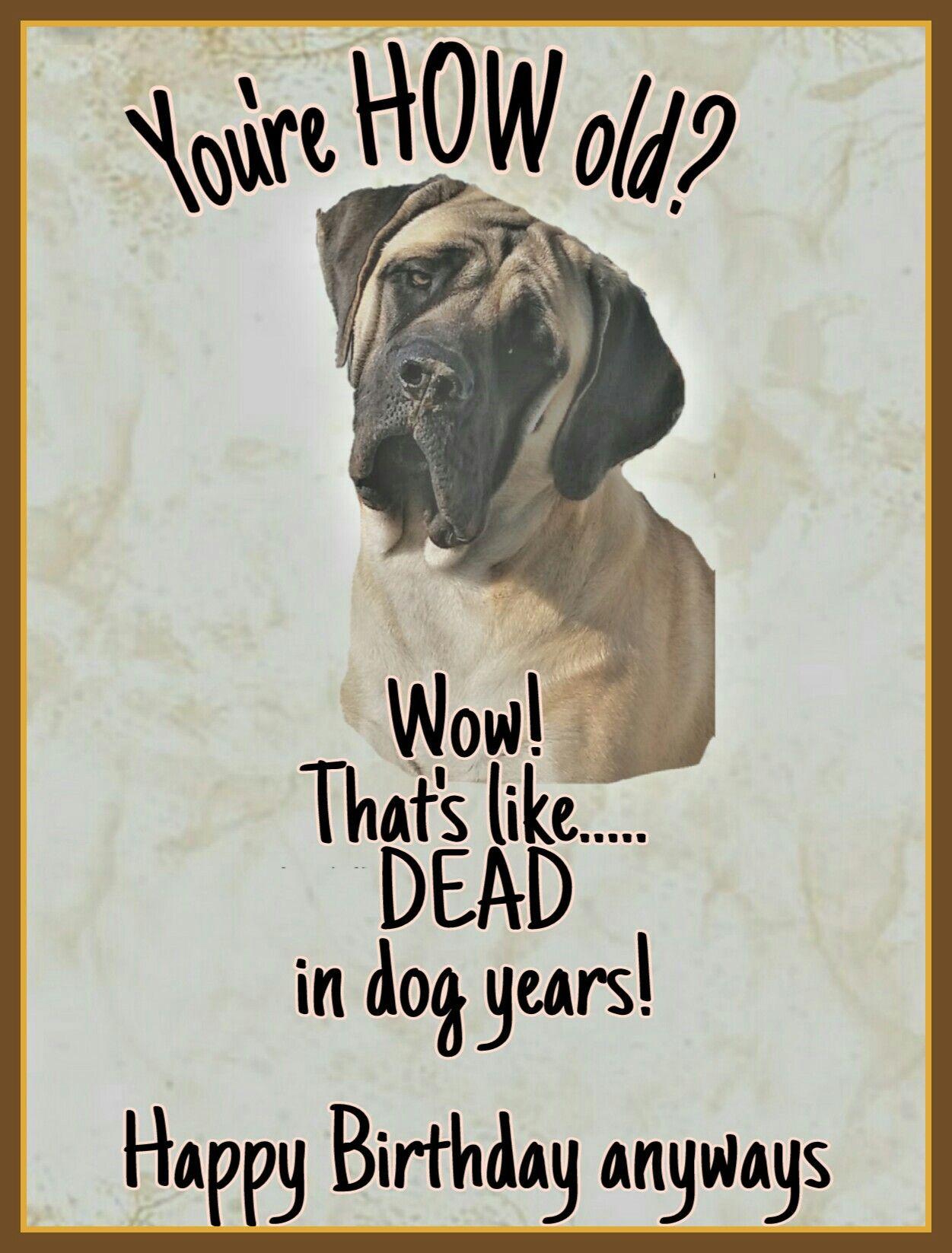 Mastiff Birthday Card Mastiff Englishmastiff Bigdog Gentlegiant Mastiff Happy Dog Birthday Happy Birthday Dog Birthday Wishes Funny Happy Birthday Funny