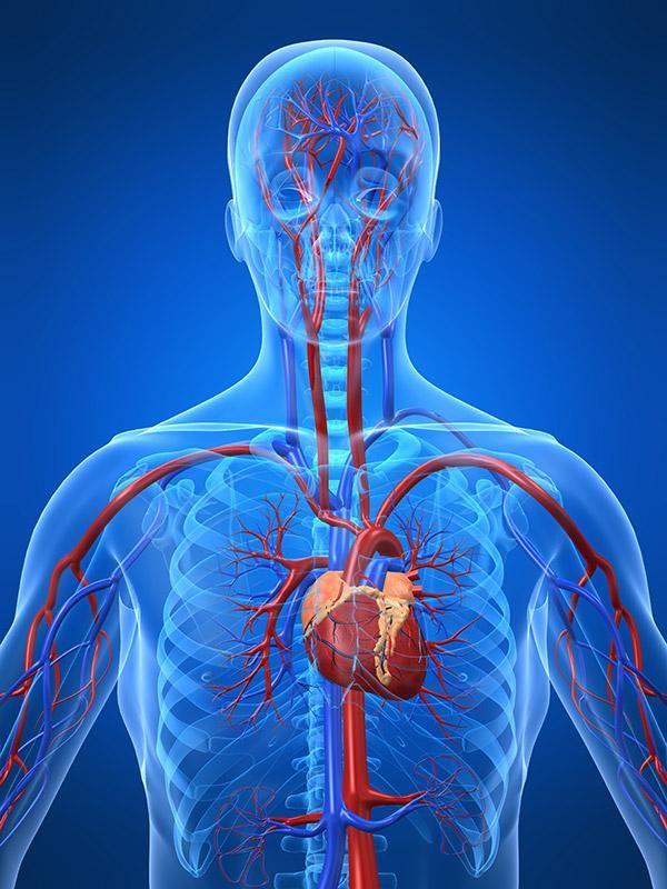 Gross Anatomy Dissections Online Course Love Pinterest Gross