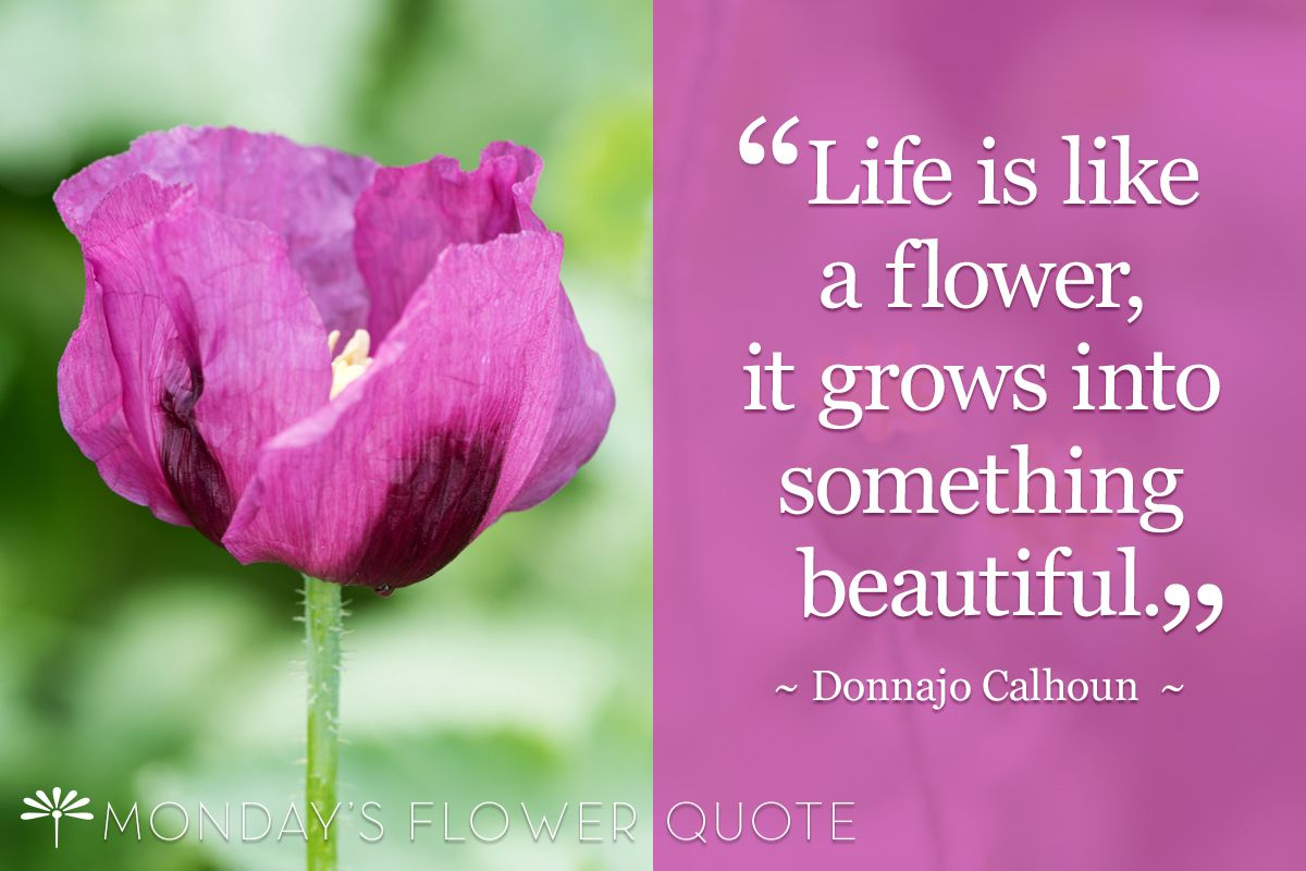 Life is like a flower, it grows into something beautiful