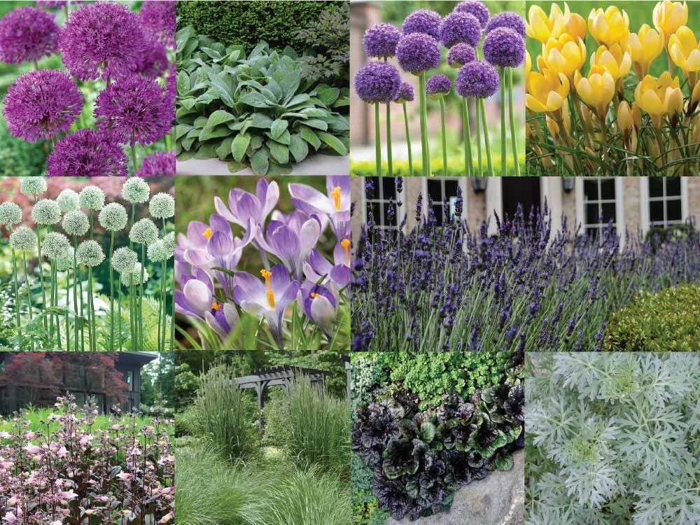 How To Use Alliums In A Naturalistic Garden Design Naturalistic