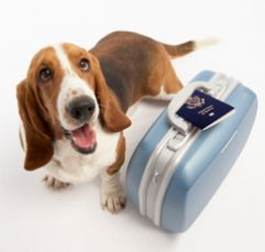 How To Travel Safely With Your Pet Travel Recreation