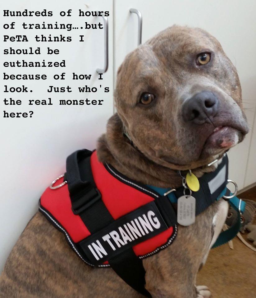 Dear PETA: Dogs Respond To PETA Joining Terrible Anti-Pit Bull Coalition