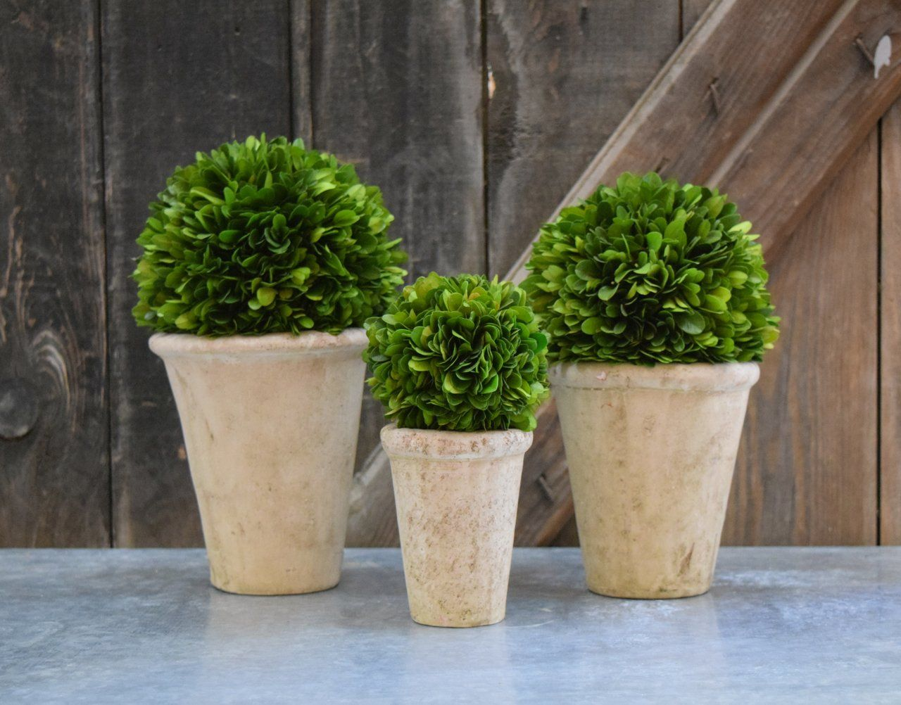 Preserved Boxwood Ball In Pots Set Of 3 In 2020 Preserved Boxwood Pot Sets Terracotta Pots