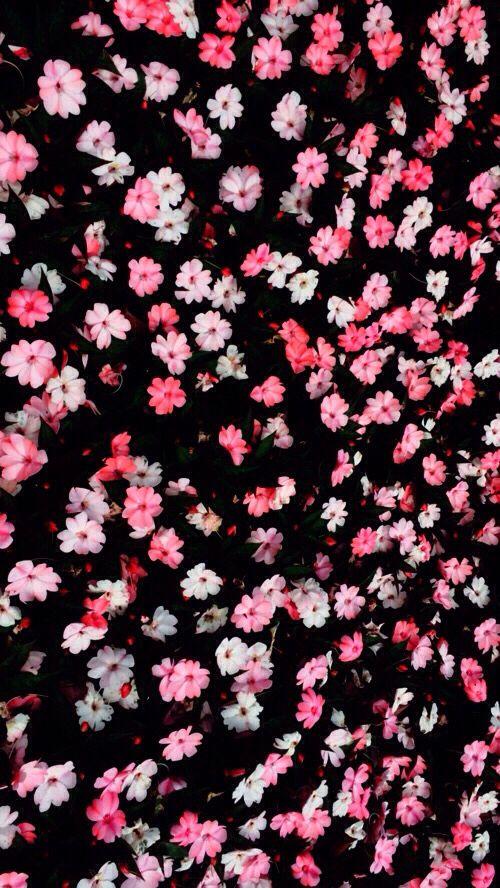 Pink And Black Flowers Wallpaper De Iphone Rosa Papel De Parede Flores Iphone De Fundo