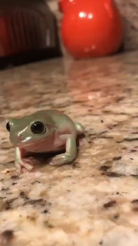 Cute frog gif to brighten your day