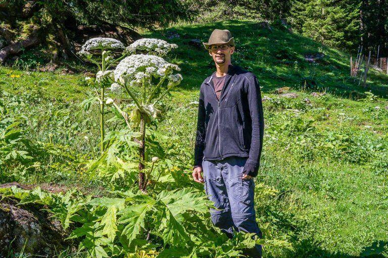 Les 12 Plantes Sauvages Toxiques A Connaitre Cueilleurs Sauvages En 2020 Plantes Sauvages Plante Plante Invasive
