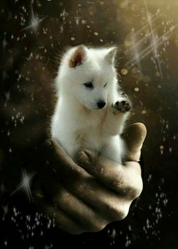 Pin By Karina Ponsot Fabbri On Clove In 2020 Baby Wolves Cute Animal Pictures Super Cute Animals