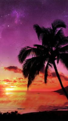 Tumblr Palm Tree Sunset Sunset Painting Sunset Canvas Painting