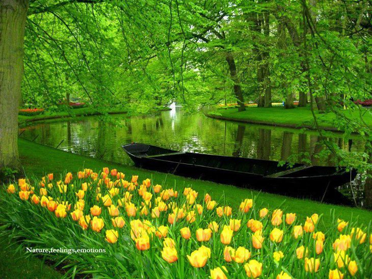 Beautiful netherland flower garden inspiration photos for Beautiful flower landscapes