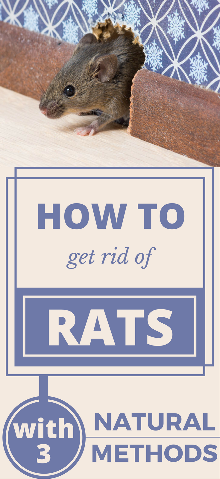 Rats Are Able To Live In The Most Hostile Conditions And They Destructive It Is Crucial That You Learn How Get Rid Of For Your Family S Health