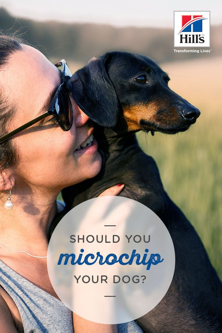 How Microchipping Can Help Your Lost Pet Hill's Pet
