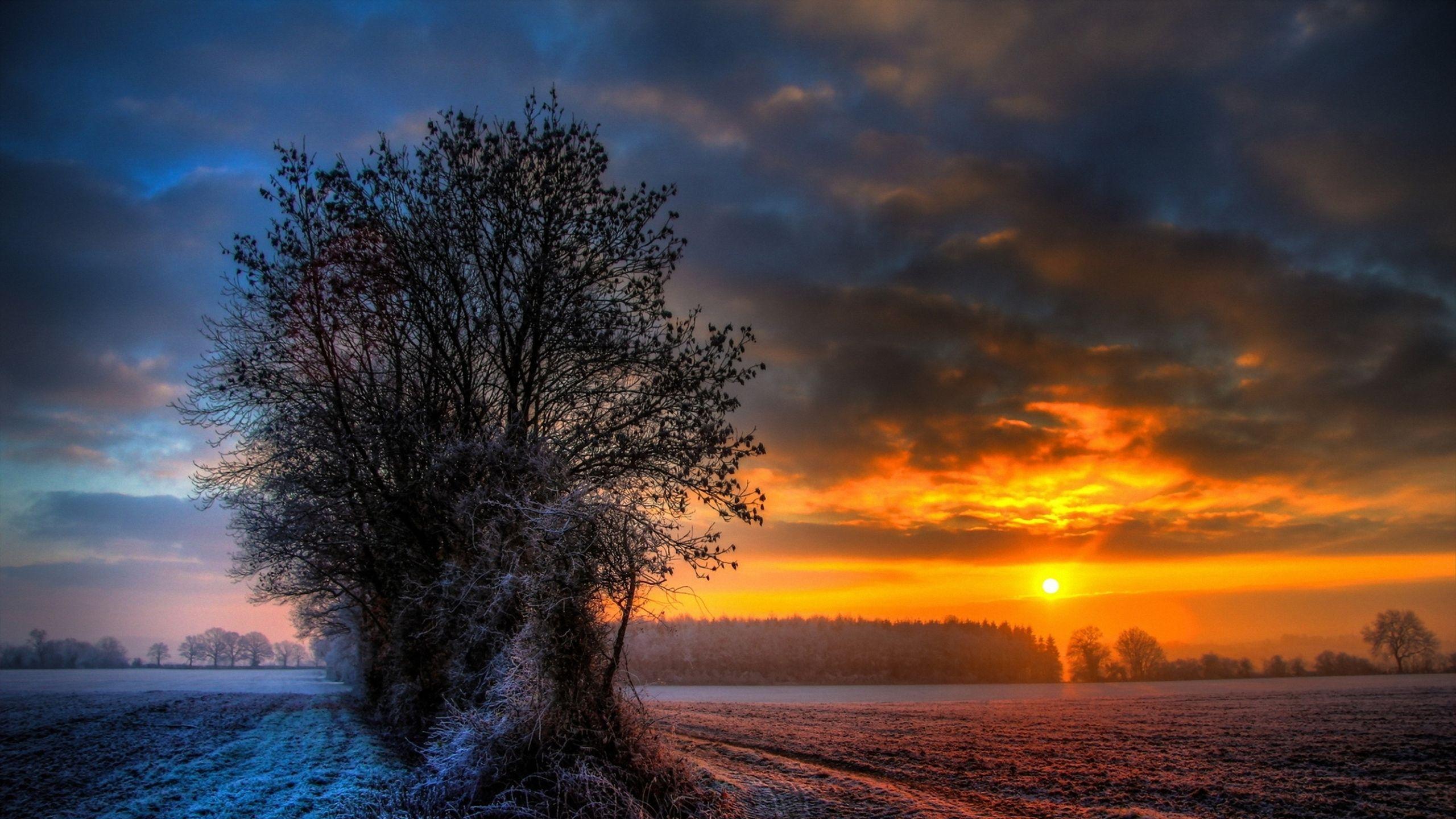 2560x1440 Wallpaper Field Frost Tree Sun Winter Sunset Wallpaper Winter Sunset Sunset Photos Hd wallpaper sunset snow winter field