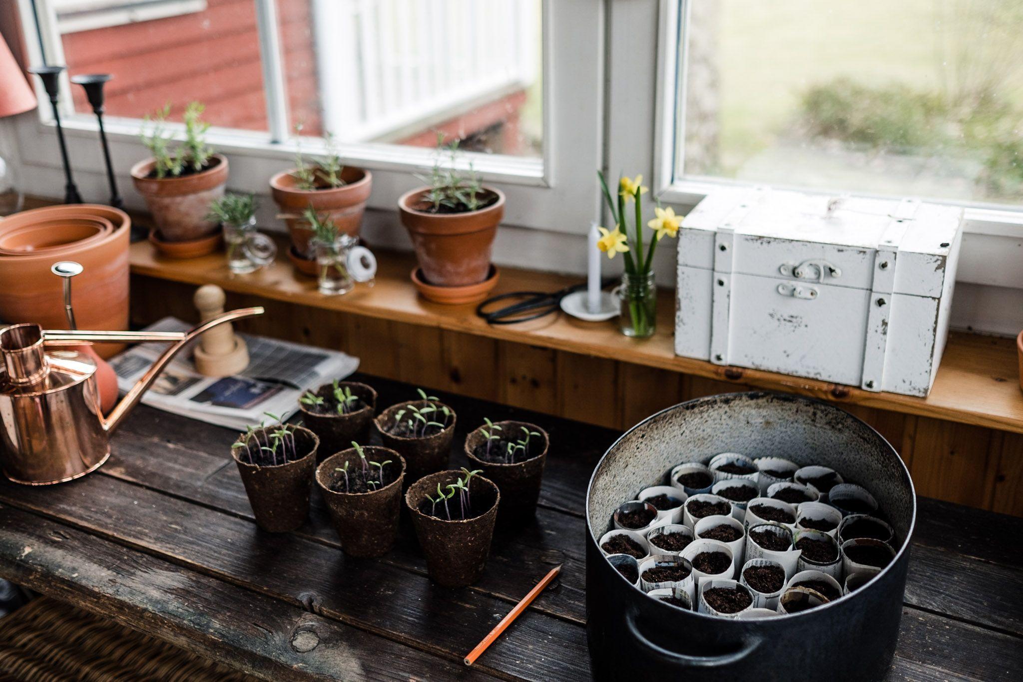 Tomaten Vermehren Pflegen Ernten Teil 3 Pikieren Und Topfen Osmers Garten Tomaten Ve In 2020 Veggie Garden Pot Potting Table