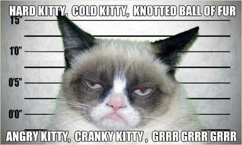 Don't mess with grumpy cat.