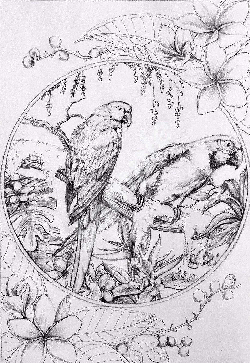 Colour My Dreams Coloring Book Birds Bird Drawings Bird Coloring Pages Coloring Books
