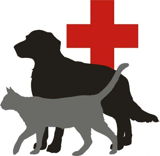 Pet First Aid Night 16th June Pets First Pets Happy Animals