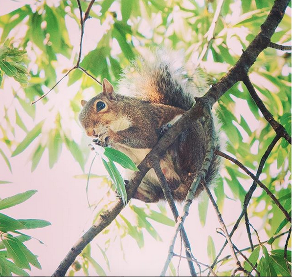 1-eyed squirrel with Instagram account is returned to