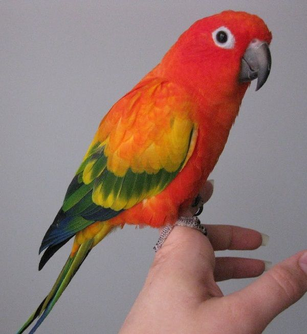information about parrot bird The ultimate parrot connection now your companion has freedom to  exercise, fly and  mini ( xxxs ) aviator harness for birds weighing under 75  grams: budgies, small parakeets, love birds, parrotlets  for more information.