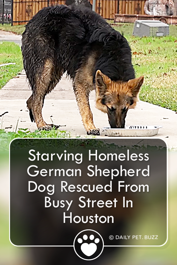 Thankfully Where There Are Homeless Animals Some Places Are Able To Help This Is A Rescue Of A Truly Rescue Dogs German Shepherd Dogs Animal Rescue Stories