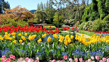 Butchart gardens victoria british columbia spring tulips treesg butchart gardens victoria british columbia spring tulips treesg mightylinksfo Images