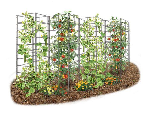 5 Reasons The Vine Spine Is The Best Garden Trellis Garden