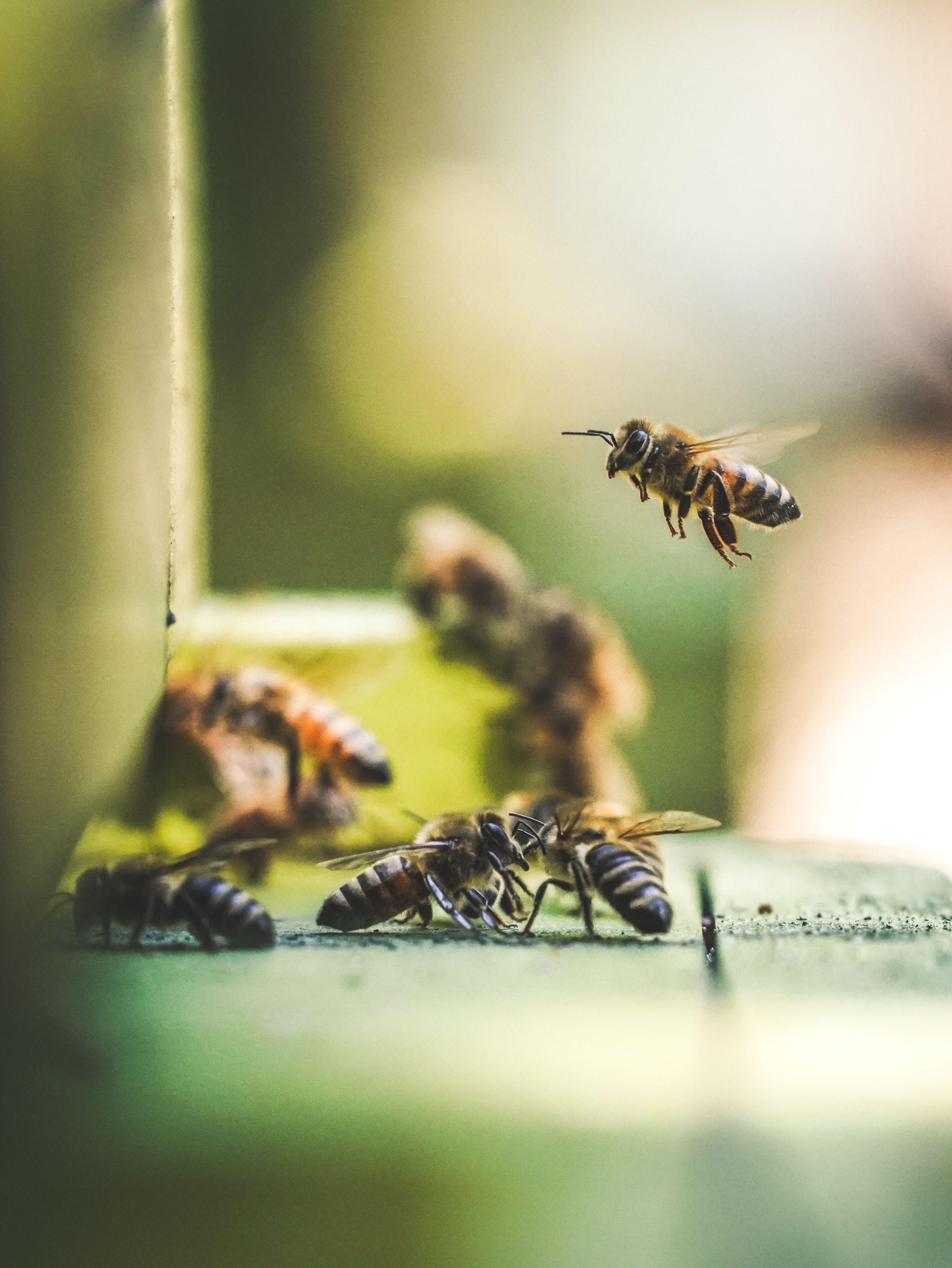 Biodiversite En Permaculture Avoir Un Jardin Durable In 2020